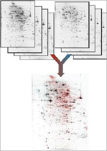 Proteomics by extreme high resolution 2D electrophoresis